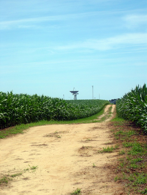A picture of a cornfield and large dish near Wallops Island launch facility near Atlantic, Virginia